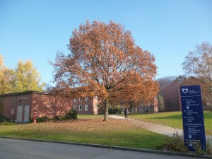 Bremen_2012-11-25 005